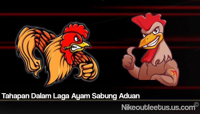 Tahapan Dalam Laga Ayam Sabung Aduan